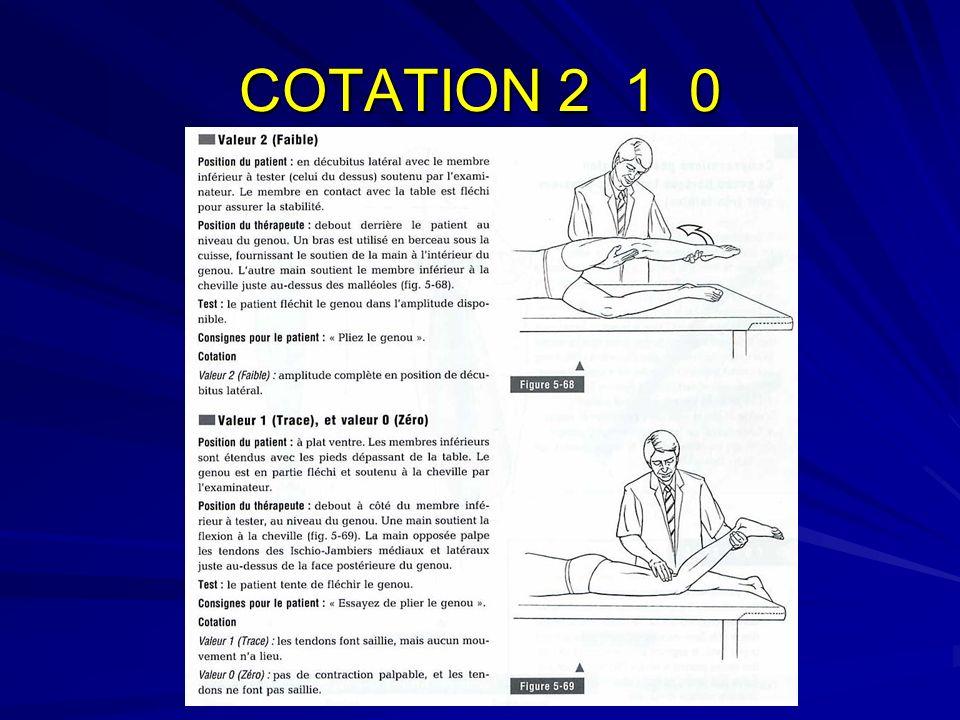 Amplitude du mouvement 120°-130° à 0° (retour de la flexion) Fixation du mouvement : 1.Contraction des m abdominaux antérieurs pour fixer linsertion dorigine du DROIT ANT.