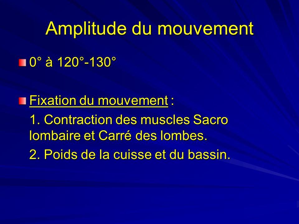 Amplitude du mouvement 0° à 120°-130° Fixation du mouvement : 1. Contraction des muscles Sacro lombaire et Carré des lombes. 2. Poids de la cuisse et
