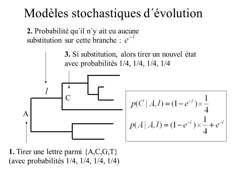 1. Tirer une lettre parmi {A,C,G,T} (avec probabilités 1/4, 1/4, 1/4, 1/4) A 3. Si substitution, alors tirer un nouvel état avec probabilités 1/4, 1/4