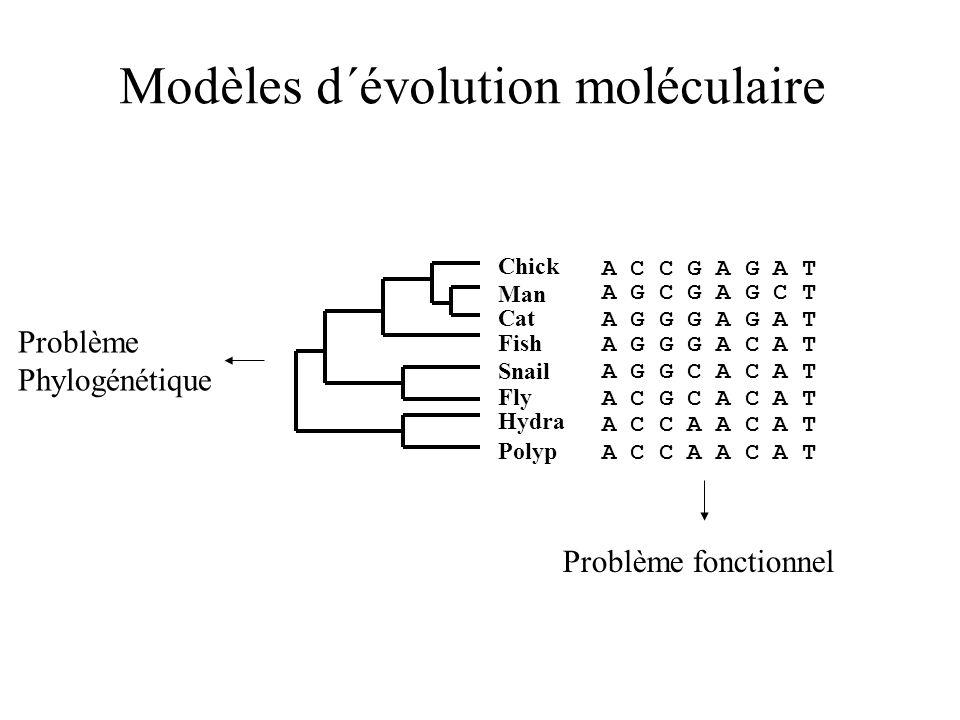 Modèles d´évolution moléculaire Chick A C C G A G A T Cat Fish Snail Fly Hydra Polyp A G C G A G C T A G G G A G A T A G G G A C A T A G G C A C A T A