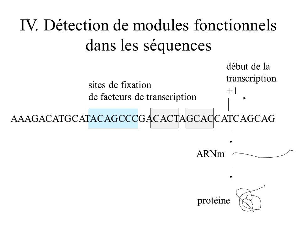IV. Détection de modules fonctionnels dans les séquences AAAGACATGCATACAGCCCGACACTAGCACCATCAGCAG ARNm protéine +1 sites de fixation de facteurs de tra