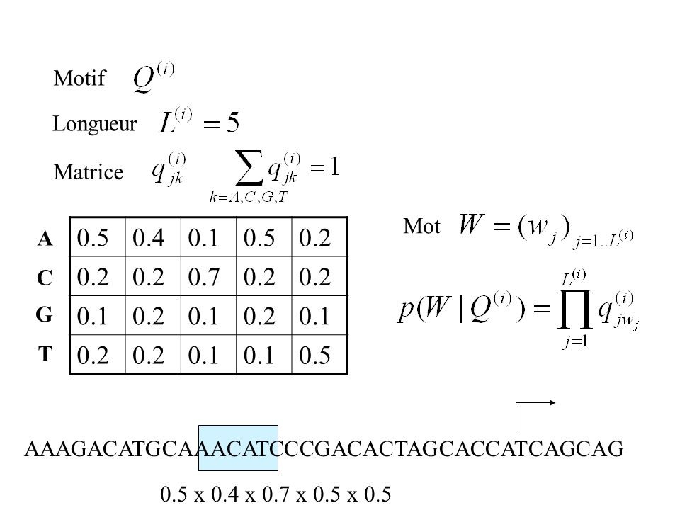 0.50.40.10.50.2 0.70.2 0.10.20.10.20.1 0.2 0.1 0.5 A C G T Motif Longueur Matrice AAAGACATGCAAACATCCCGACACTAGCACCATCAGCAG 0.5 x 0.4 x 0.7 x 0.5 x 0.5