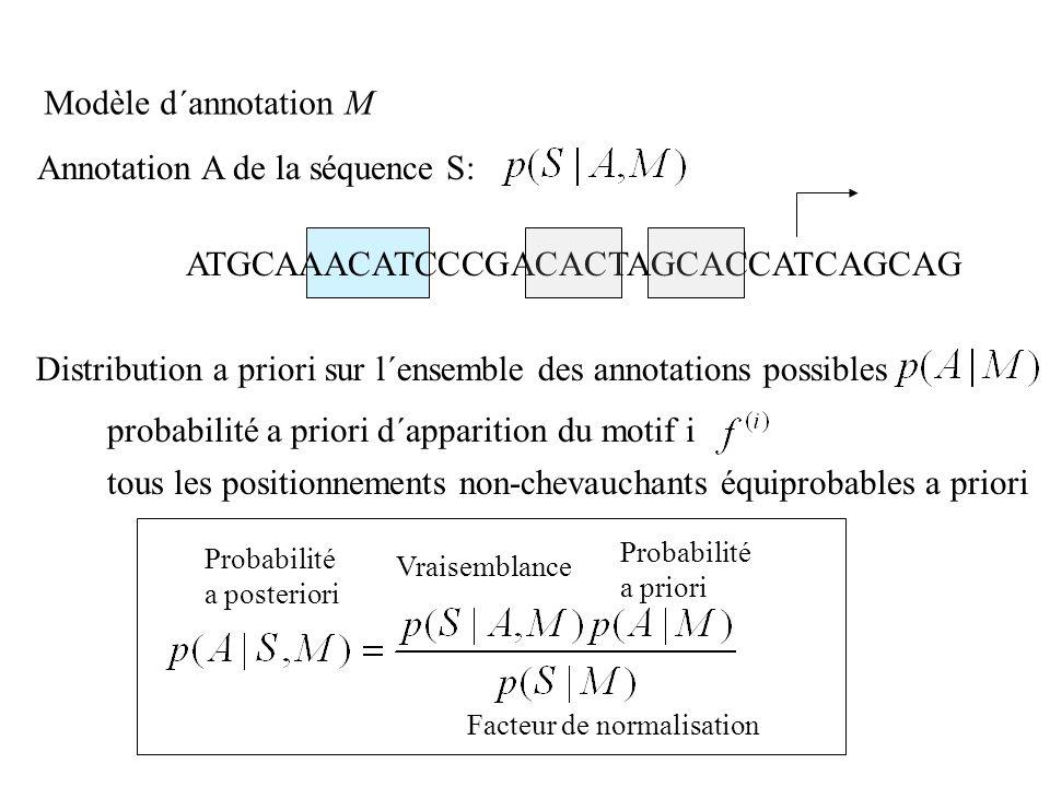ATGCAAACATCCCGACACTAGCACCATCAGCAG Annotation A de la séquence S: Distribution a priori sur l´ensemble des annotations possibles probabilité a priori d