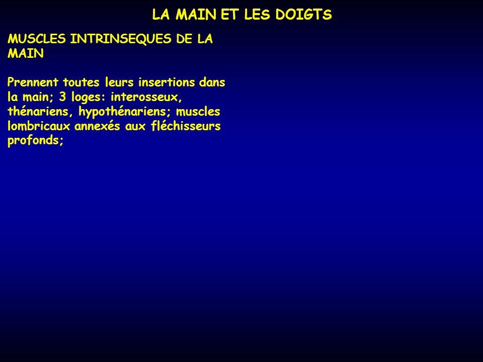 LA MAIN ET LES DOIGTS MUSCLES INTRINSEQUES DE LA MAIN Prennent toutes leurs insertions dans la main; 3 loges: interosseux, thénariens, hypothénariens;