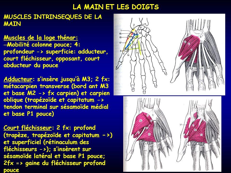 LA MAIN ET LES DOIGTS MUSCLES INTRINSEQUES DE LA MAIN Muscles de la loge thénar: Mobilité colonne pouce; 4: profondeur -> superficie: adducteur, court