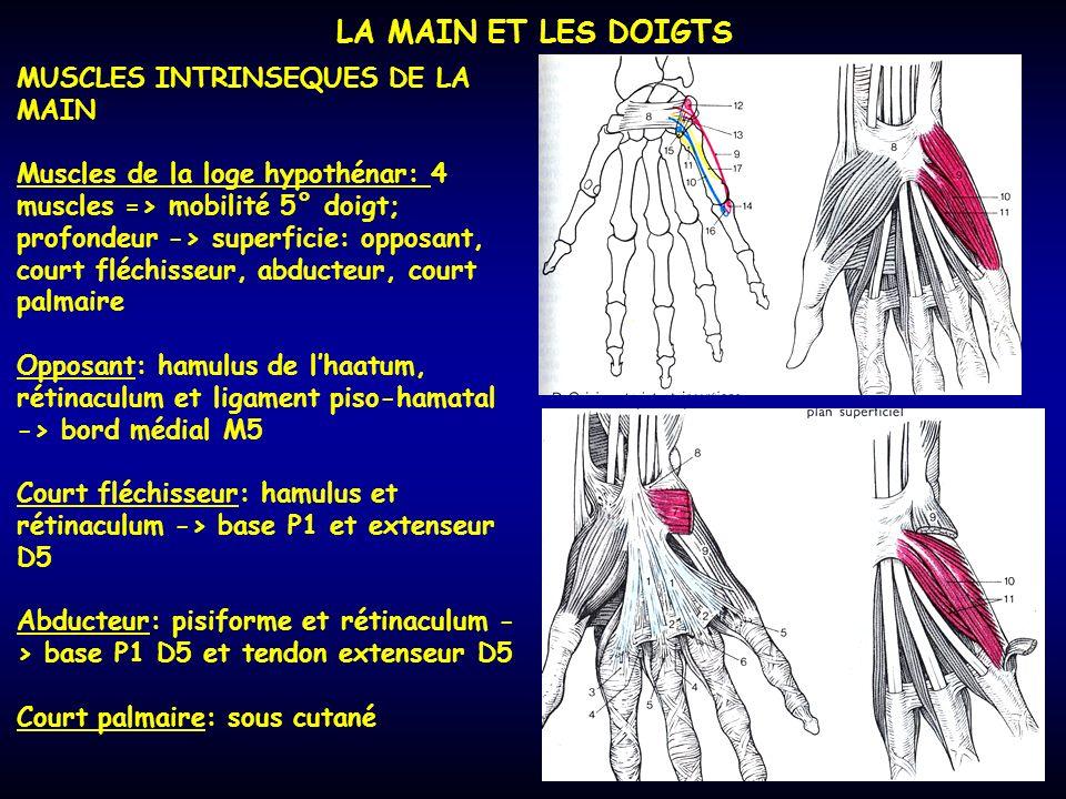 LA MAIN ET LES DOIGTS MUSCLES INTRINSEQUES DE LA MAIN Muscles de la loge hypothénar: 4 muscles => mobilité 5° doigt; profondeur -> superficie: opposan