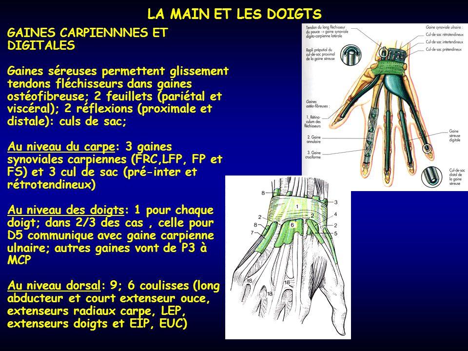 LA MAIN ET LES DOIGTS GAINES CARPIENNNES ET DIGITALES Gaines séreuses permettent glissement tendons fléchisseurs dans gaines ostéofibreuse; 2 feuillet