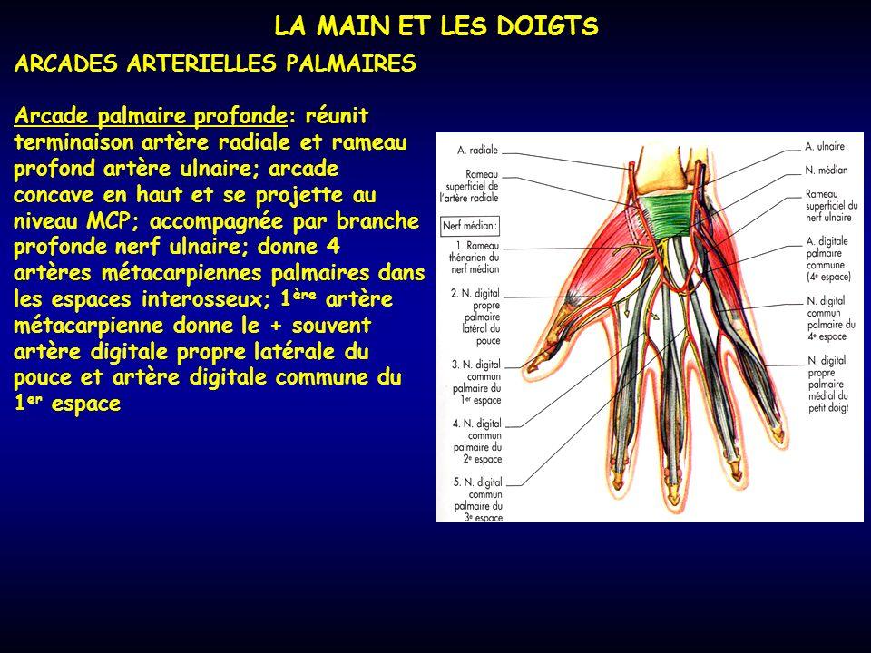 LA MAIN ET LES DOIGTS ARCADES ARTERIELLES PALMAIRES Arcade palmaire profonde: réunit terminaison artère radiale et rameau profond artère ulnaire; arca