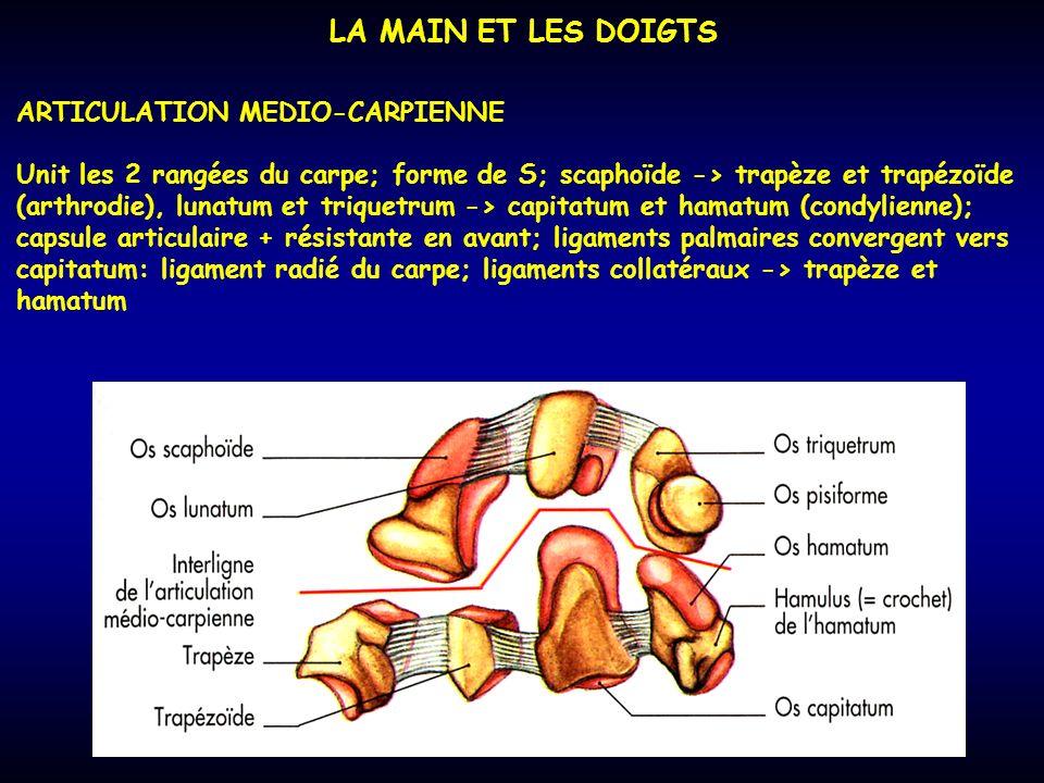 LA MAIN ET LES DOIGTS ARTICULATION MEDIO-CARPIENNE Unit les 2 rangées du carpe; forme de S; scaphoïde -> trapèze et trapézoïde (arthrodie), lunatum et
