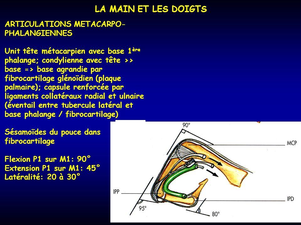 LA MAIN ET LES DOIGTS ARTICULATIONS METACARPO- PHALANGIENNES Unit tête métacarpien avec base 1 ère phalange; condylienne avec tête >> base => base agr