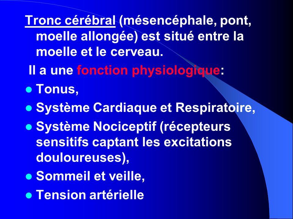 Tronc cérébral (mésencéphale, pont, moelle allongée) est situé entre la moelle et le cerveau. Il a une fonction physiologique: Tonus, Système Cardiaqu