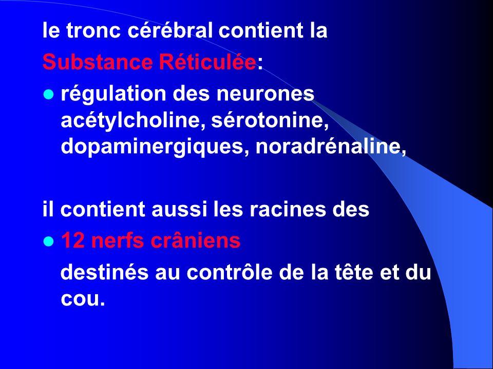 le tronc cérébral contient la Substance Réticulée: régulation des neurones acétylcholine, sérotonine, dopaminergiques, noradrénaline, il contient auss