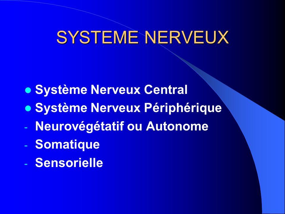 SYSTEME NERVEUX Système Nerveux Central Système Nerveux Périphérique - Neurovégétatif ou Autonome - Somatique - Sensorielle