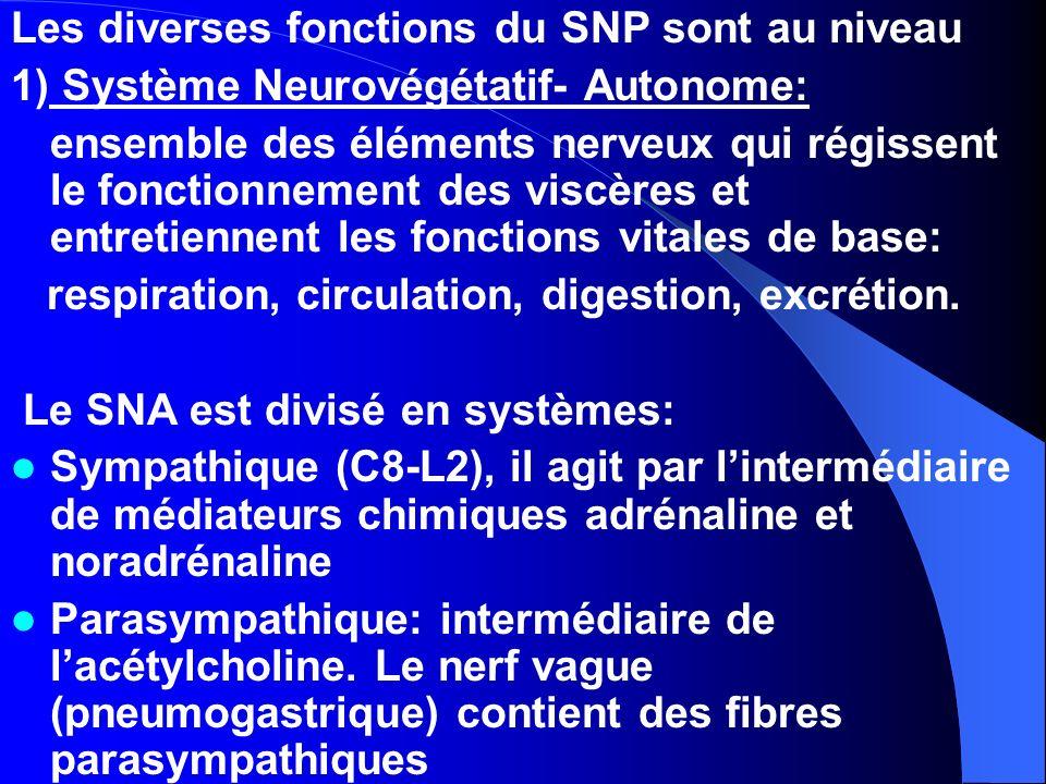 Les diverses fonctions du SNP sont au niveau 1) Système Neurovégétatif- Autonome: ensemble des éléments nerveux qui régissent le fonctionnement des vi