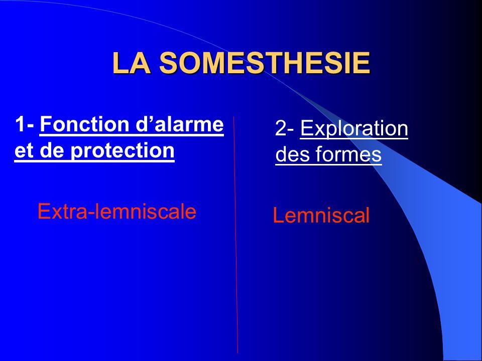 LA SOMESTHESIE 2- Exploration des formes 1- Fonction dalarme et de protection Extra-lemniscale Lemniscal