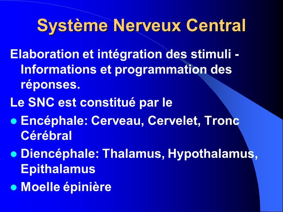 Système Nerveux Central Elaboration et intégration des stimuli - Informations et programmation des réponses. Le SNC est constitué par le Encéphale: Ce