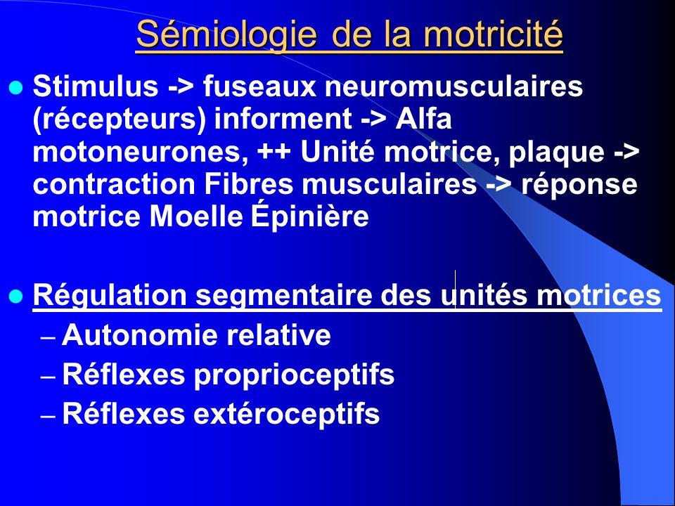 Sémiologie de la motricité Stimulus -> fuseaux neuromusculaires (récepteurs) informent -> Alfa motoneurones, ++ Unité motrice, plaque -> contraction F