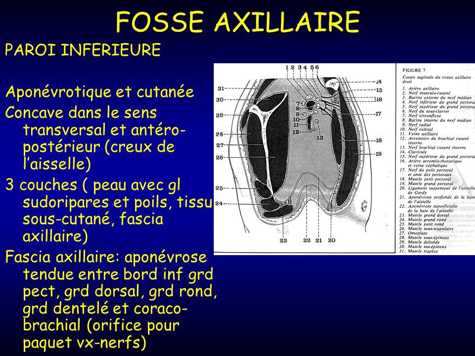 FOSSE AXILLAIRE PAROI INFERIEURE Aponévrotique et cutanée Concave dans le sens transversal et antéro- postérieur (creux de laisselle) 3 couches ( peau avec gl sudoripares et poils, tissu sous-cutané, fascia axillaire) Fascia axillaire: aponévrose tendue entre bord inf grd pect, grd dorsal, grd rond, grd dentelé et coraco- brachial (orifice pour paquet vx-nerfs)