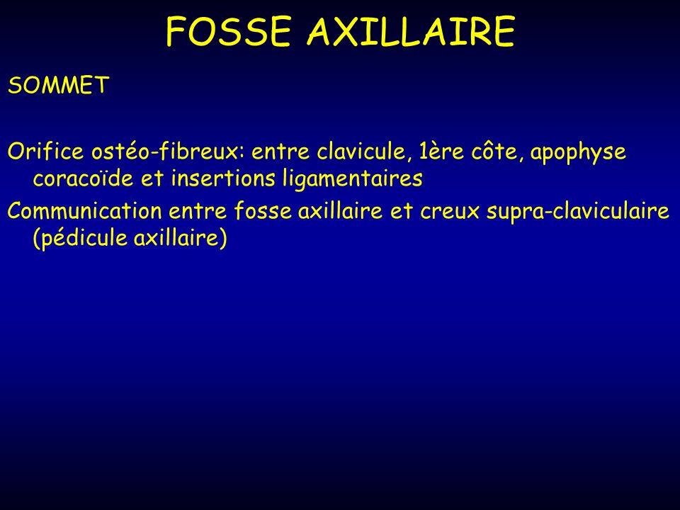 FOSSE AXILLAIRE SOMMET Orifice ostéo-fibreux: entre clavicule, 1ère côte, apophyse coracoïde et insertions ligamentaires Communication entre fosse axillaire et creux supra-claviculaire (pédicule axillaire)