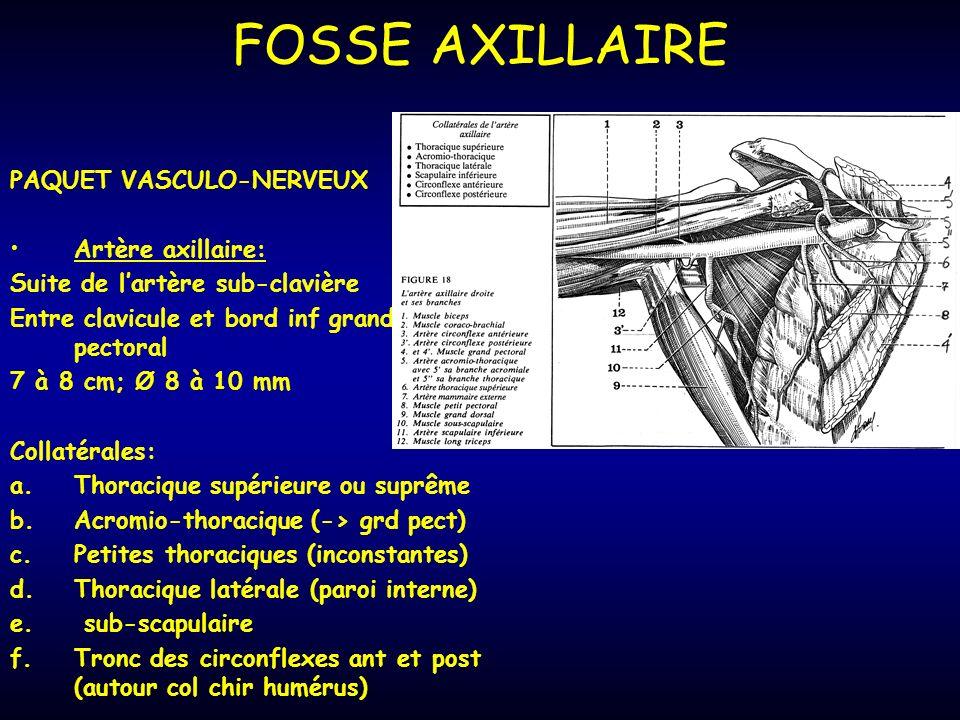 FOSSE AXILLAIRE PAQUET VASCULO-NERVEUX Artère axillaire: Suite de lartère sub-clavière Entre clavicule et bord inf grand pectoral 7 à 8 cm; Ø 8 à 10 mm Collatérales: a.Thoracique supérieure ou suprême b.Acromio-thoracique (-> grd pect) c.Petites thoraciques (inconstantes) d.Thoracique latérale (paroi interne) e.