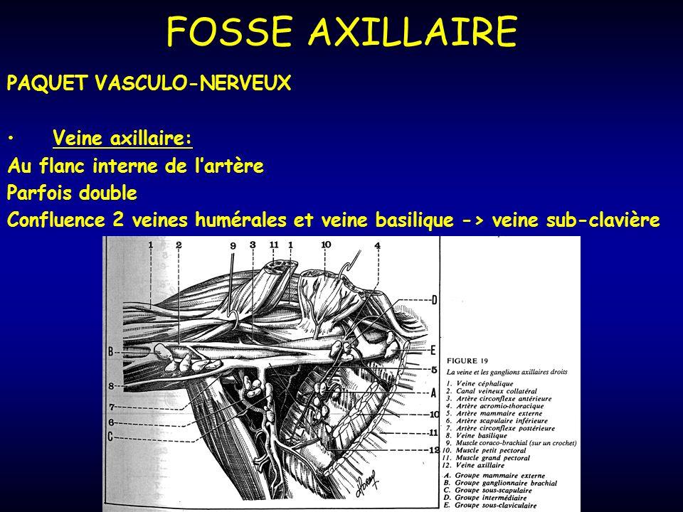FOSSE AXILLAIRE PAQUET VASCULO-NERVEUX Veine axillaire: Au flanc interne de lartère Parfois double Confluence 2 veines humérales et veine basilique -> veine sub-clavière