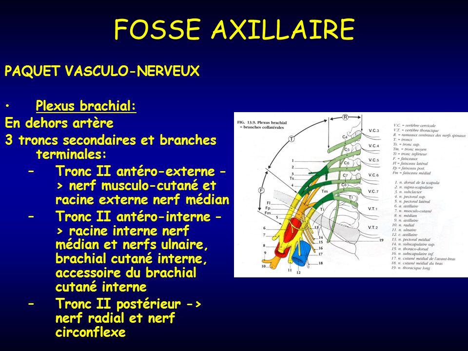 PAQUET VASCULO-NERVEUX Plexus brachial: En dehors artère 3 troncs secondaires et branches terminales: –Tronc II antéro-externe - > nerf musculo-cutané et racine externe nerf médian –Tronc II antéro-interne - > racine interne nerf médian et nerfs ulnaire, brachial cutané interne, accessoire du brachial cutané interne –Tronc II postérieur -> nerf radial et nerf circonflexe FOSSE AXILLAIRE