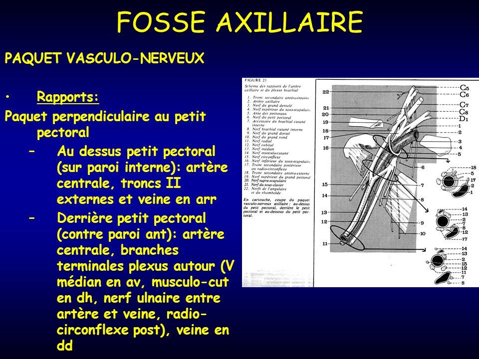 PAQUET VASCULO-NERVEUX Rapports: Paquet perpendiculaire au petit pectoral –Au dessus petit pectoral (sur paroi interne): artère centrale, troncs II externes et veine en arr –Derrière petit pectoral (contre paroi ant): artère centrale, branches terminales plexus autour (V médian en av, musculo-cut en dh, nerf ulnaire entre artère et veine, radio- circonflexe post), veine en dd