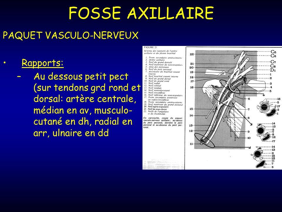 FOSSE AXILLAIRE PAQUET VASCULO-NERVEUX Rapports: –Au dessous petit pect (sur tendons grd rond et dorsal: artère centrale, médian en av, musculo- cutané en dh, radial en arr, ulnaire en dd