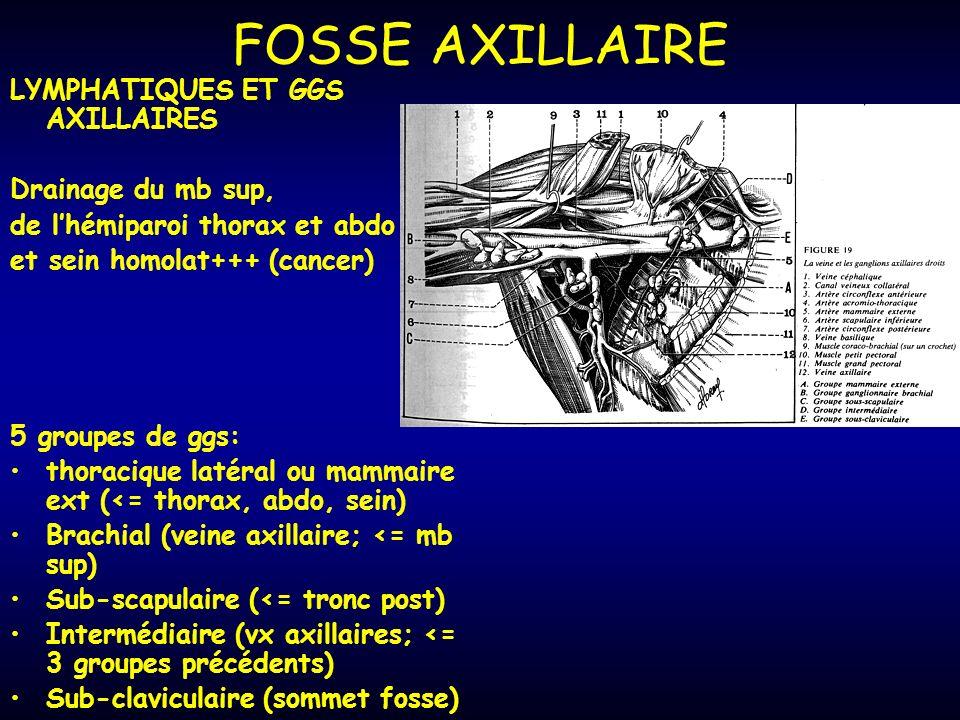 FOSSE AXILLAIRE LYMPHATIQUES ET GGS AXILLAIRES Drainage du mb sup, de lhémiparoi thorax et abdo et sein homolat+++ (cancer) 5 groupes de ggs: thoracique latéral ou mammaire ext (<= thorax, abdo, sein) Brachial (veine axillaire; <= mb sup) Sub-scapulaire (<= tronc post) Intermédiaire (vx axillaires; <= 3 groupes précédents) Sub-claviculaire (sommet fosse)