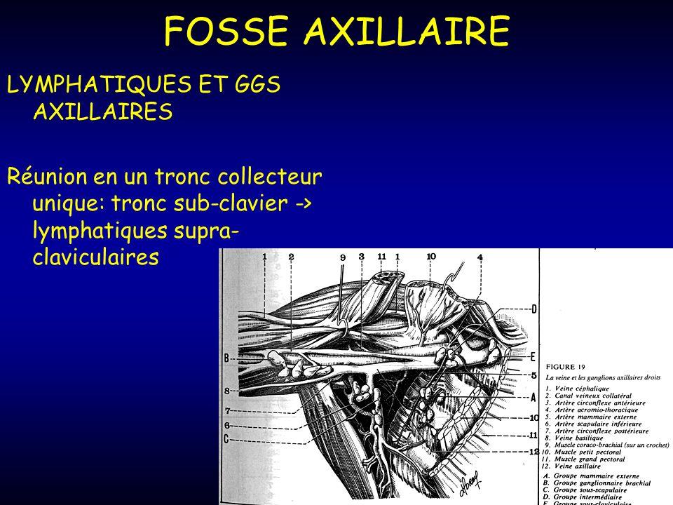 FOSSE AXILLAIRE LYMPHATIQUES ET GGS AXILLAIRES Réunion en un tronc collecteur unique: tronc sub-clavier -> lymphatiques supra- claviculaires
