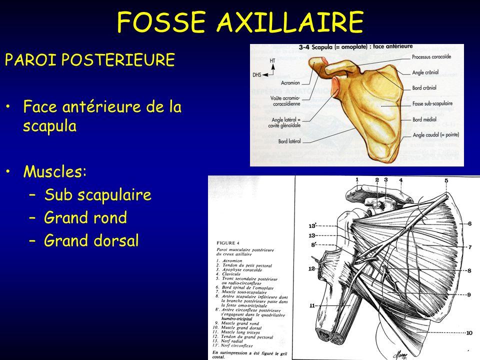 FOSSE AXILLAIRE PAROI POSTERIEURE Face antérieure de la scapula Muscles: –Sub scapulaire –Grand rond –Grand dorsal