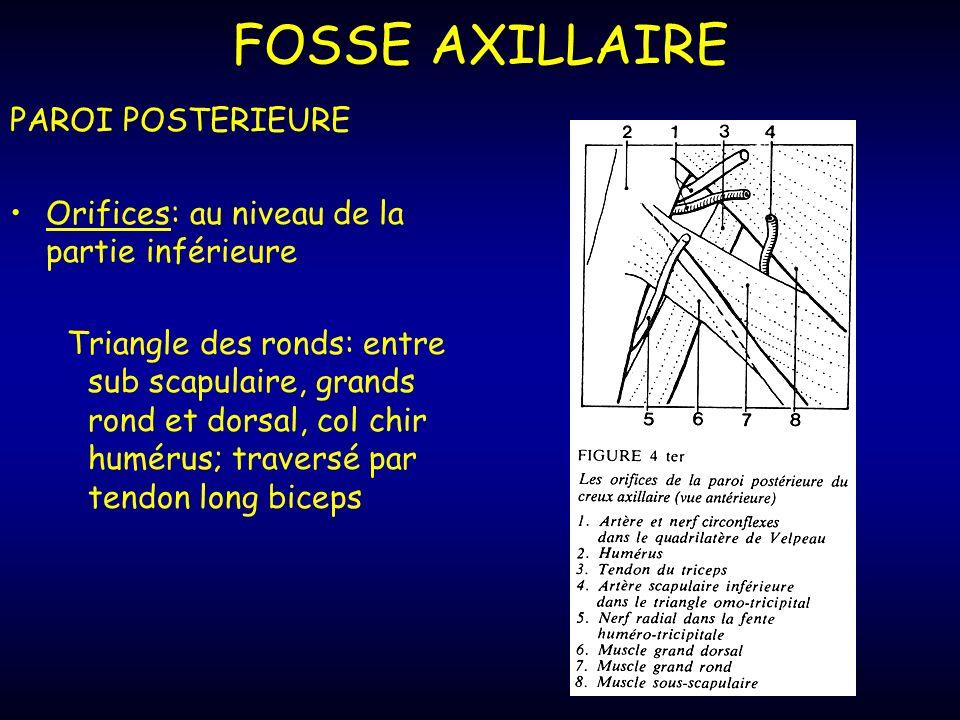 FOSSE AXILLAIRE PAROI POSTERIEURE Orifices: au niveau de la partie inférieure Triangle des ronds: entre sub scapulaire, grands rond et dorsal, col chir humérus; traversé par tendon long biceps