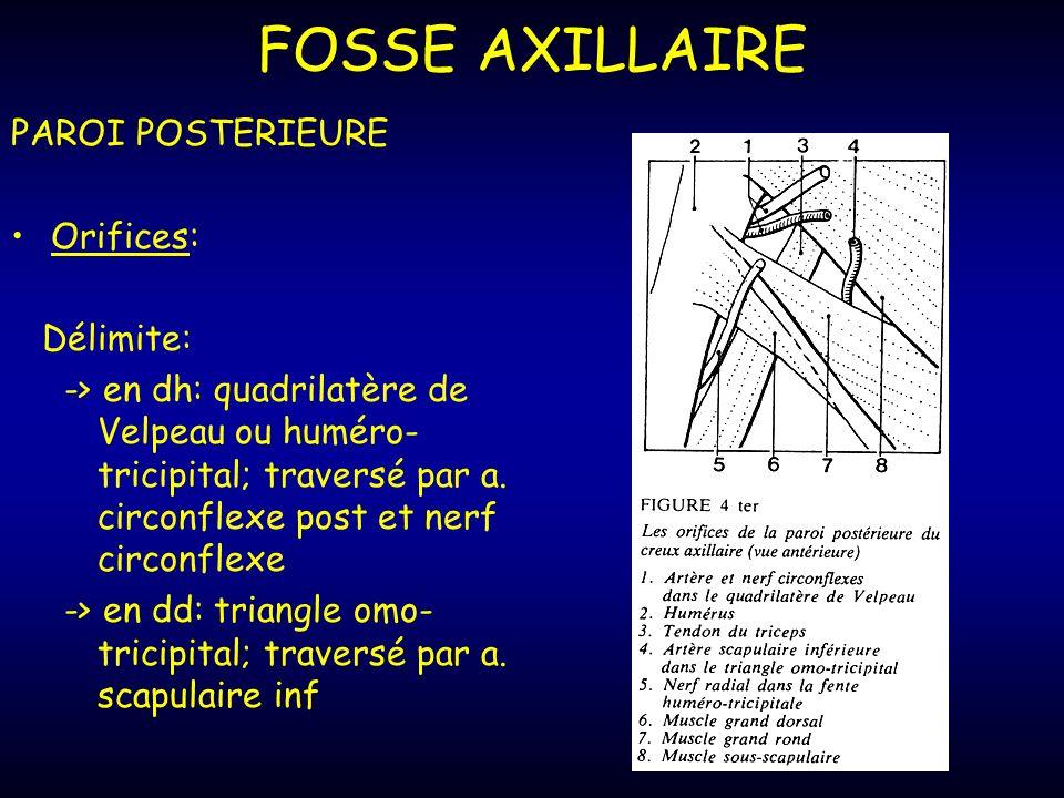 FOSSE AXILLAIRE PAROI POSTERIEURE Orifices: Délimite: -> en dh: quadrilatère de Velpeau ou huméro- tricipital; traversé par a.