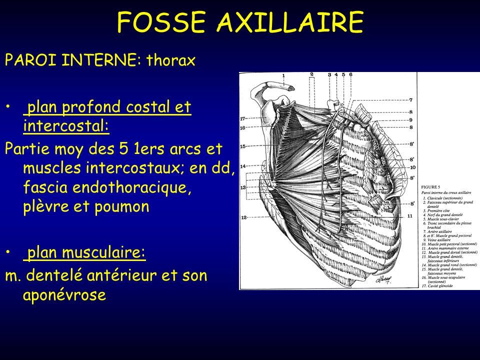 FOSSE AXILLAIRE PAROI INTERNE: thorax plan profond costal et intercostal: Partie moy des 5 1ers arcs et muscles intercostaux; en dd, fascia endothoracique, plèvre et poumon plan musculaire: m.