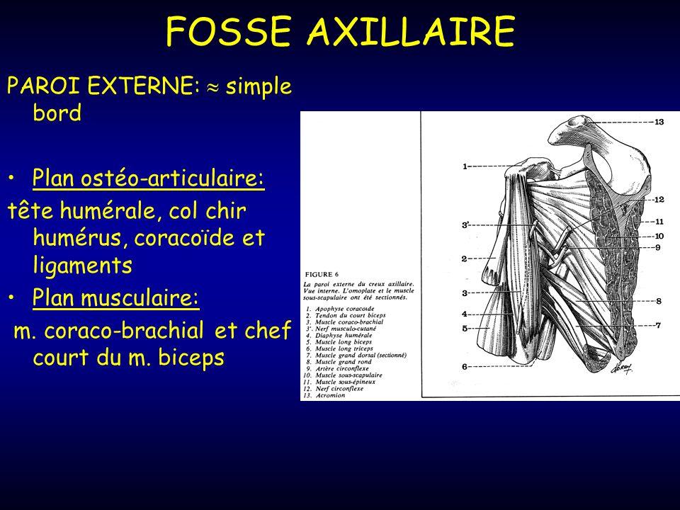 FOSSE AXILLAIRE PAROI EXTERNE: simple bord Plan ostéo-articulaire: tête humérale, col chir humérus, coracoïde et ligaments Plan musculaire: m.
