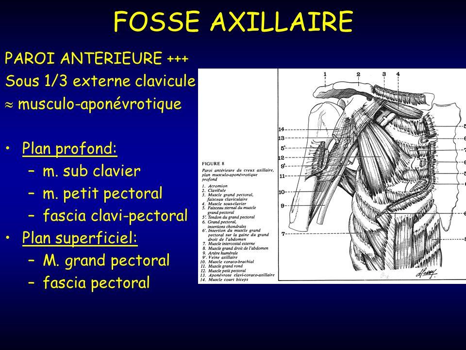 FOSSE AXILLAIRE PAROI ANTERIEURE +++ Sous 1/3 externe clavicule musculo-aponévrotique Plan profond: –m.