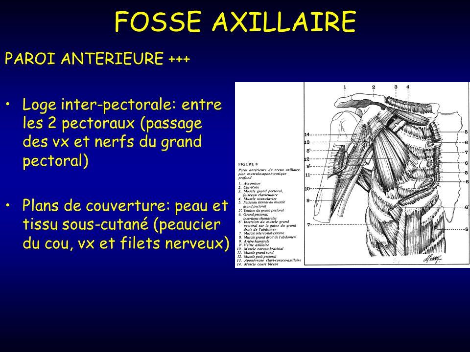 FOSSE AXILLAIRE PAROI ANTERIEURE +++ Loge inter-pectorale: entre les 2 pectoraux (passage des vx et nerfs du grand pectoral) Plans de couverture: peau et tissu sous-cutané (peaucier du cou, vx et filets nerveux)