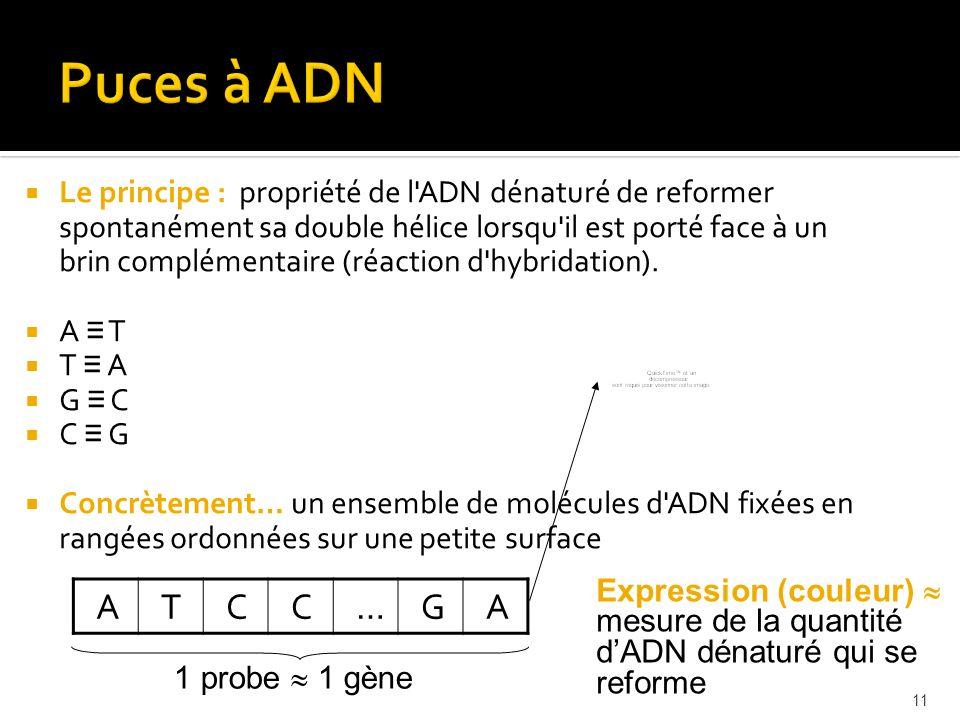 11 Le principe : propriété de l'ADN dénaturé de reformer spontanément sa double hélice lorsqu'il est porté face à un brin complémentaire (réaction d'h