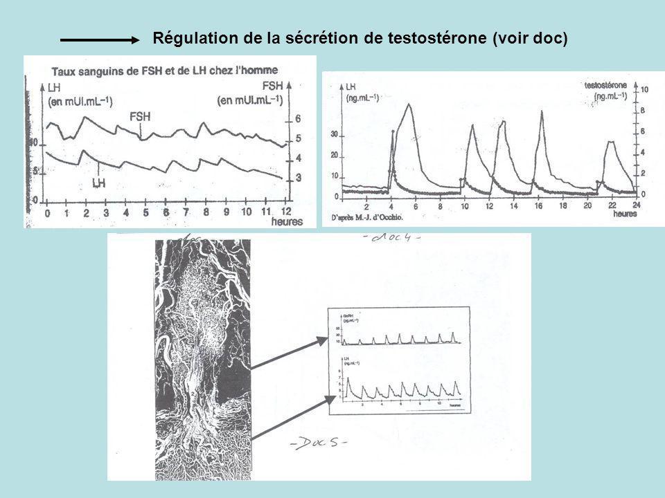 Régulation de la sécrétion de testostérone (voir doc)