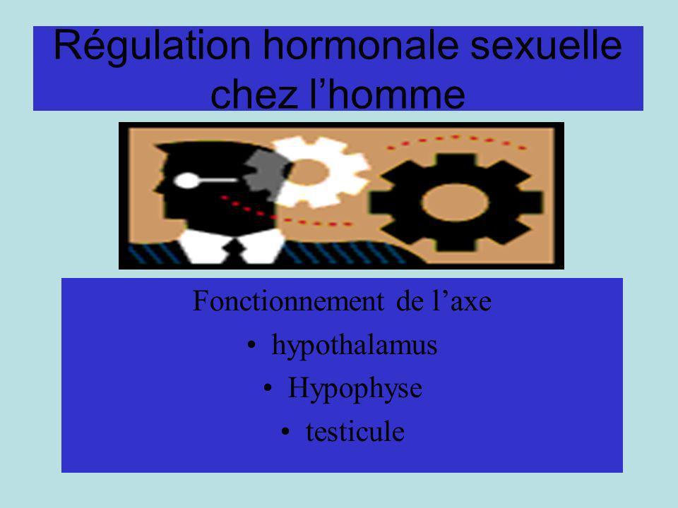 Régulation hormonale sexuelle chez lhomme Fonctionnement de laxe hypothalamus Hypophyse testicule