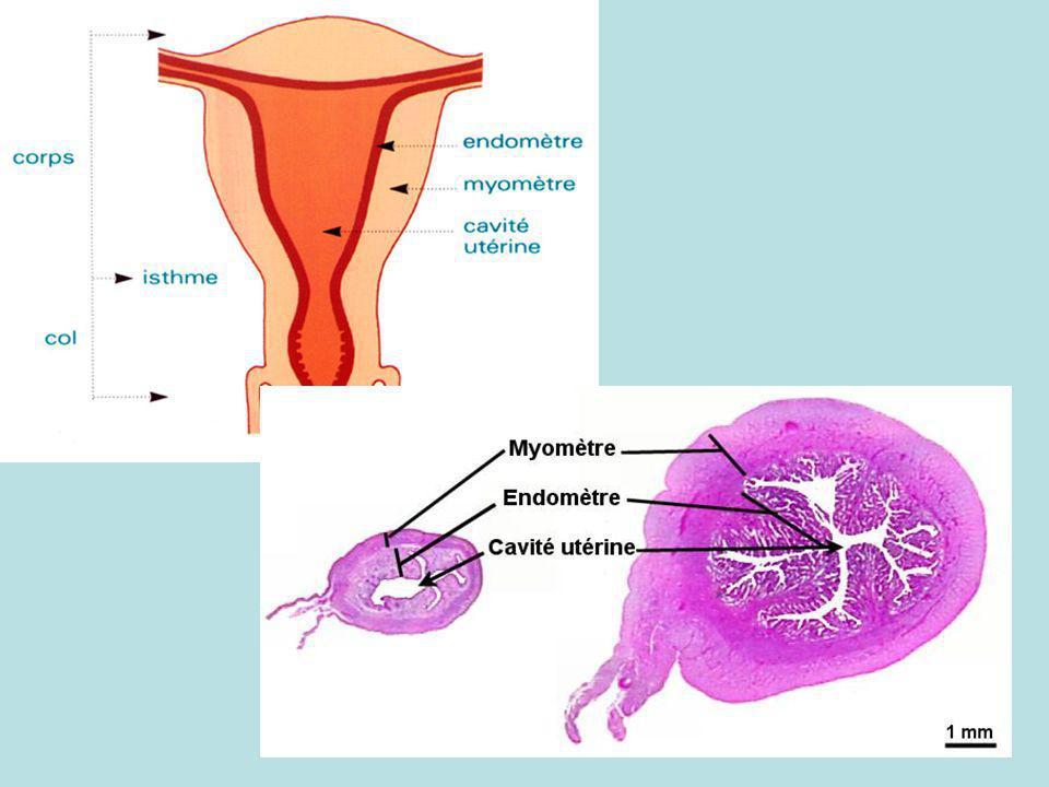 Les 3 niveaux d action des contraceptifs hormonaux axe hypothalomo-hypophysaire : l abaissement des concentrations plasmatiques des gonadotrophines, la suppression du pic des oestrogènes et du pic de LH aboutissent à une inhibition de l ovulation endomètre : atrophie de l endomètre qui devient impropre à la nidation glaire cervicale la glaire devient imperméable à la migration des spermatozoïdes