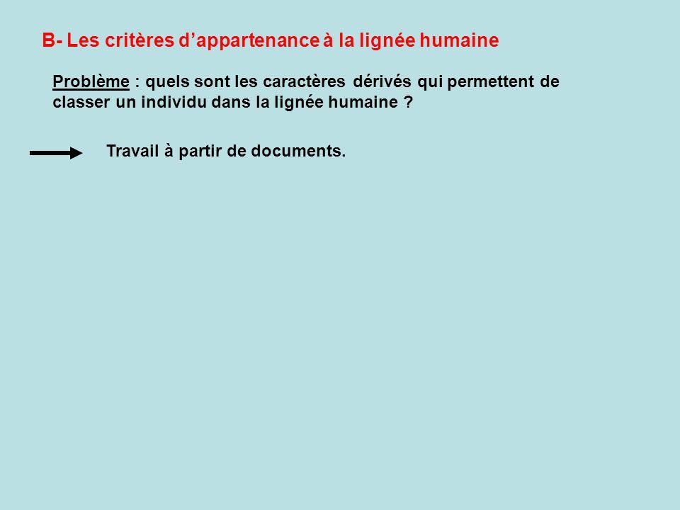 B- Les critères dappartenance à la lignée humaine Problème : quels sont les caractères dérivés qui permettent de classer un individu dans la lignée hu