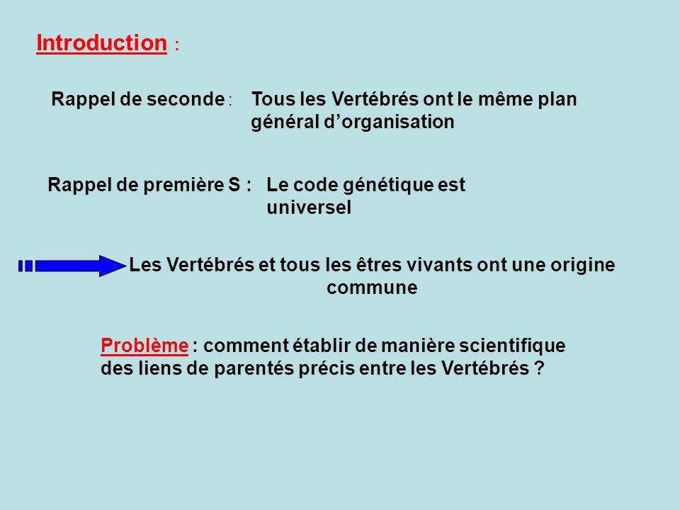 Introduction : Rappel de seconde : Le code génétique est universel Tous les Vertébrés ont le même plan général dorganisation Rappel de première S : Problème : comment établir de manière scientifique des liens de parentés précis entre les Vertébrés .