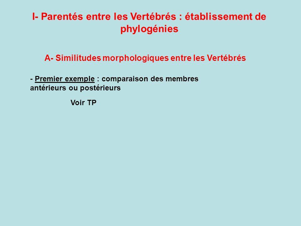 I- Parentés entre les Vertébrés : établissement de phylogénies A- Similitudes morphologiques entre les Vertébrés - Premier exemple : comparaison des membres antérieurs ou postérieurs Voir TP