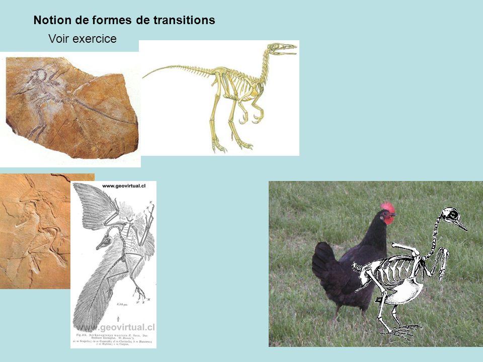 Notion de formes de transitions Voir exercice