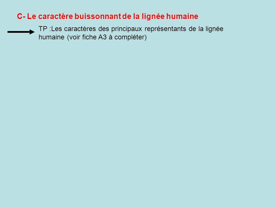 C- Le caractère buissonnant de la lignée humaine TP :Les caractères des principaux représentants de la lignée humaine (voir fiche A3 à compléter)