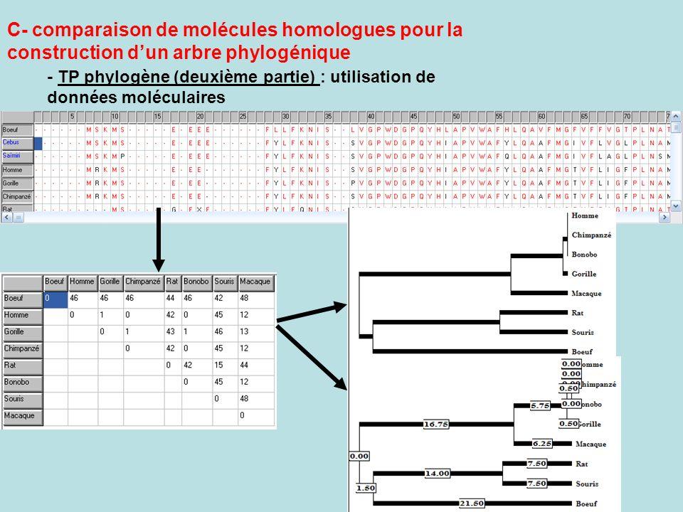 C- comparaison de molécules homologues pour la construction dun arbre phylogénique - TP phylogène (deuxième partie) : utilisation de données moléculai