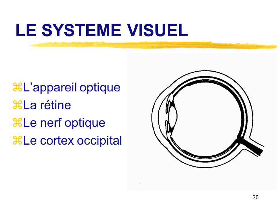 25 LE SYSTEME VISUEL zLappareil optique zLa rétine zLe nerf optique zLe cortex occipital