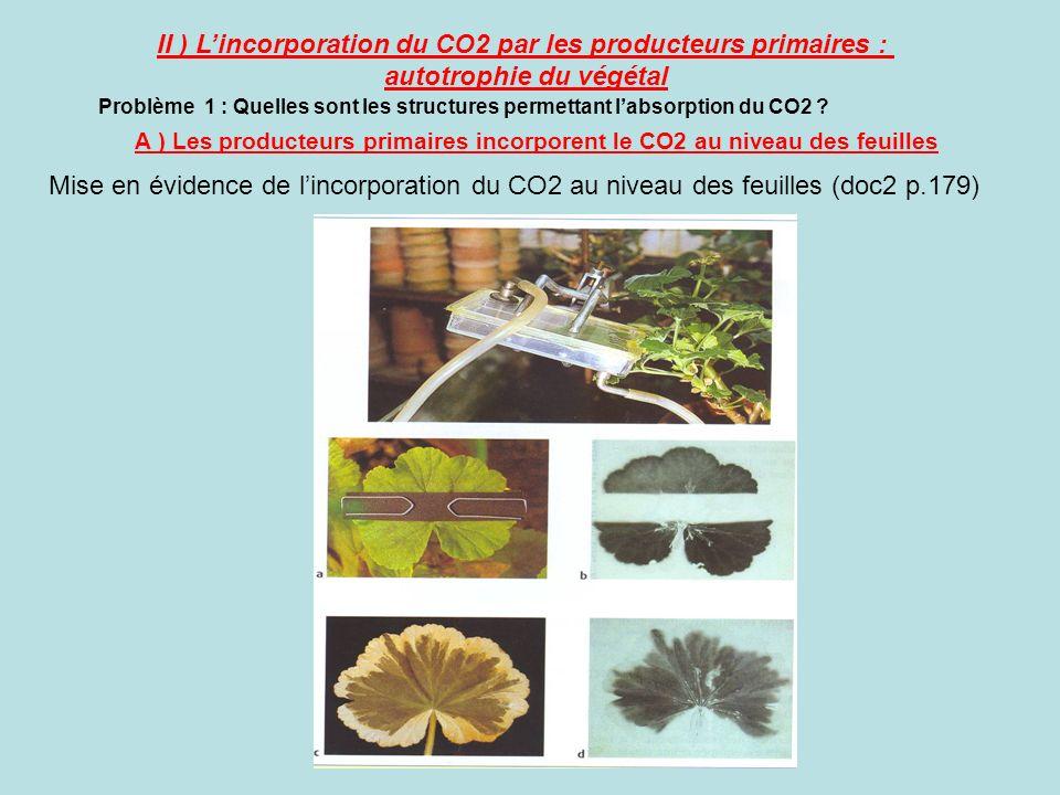 A ) Les producteurs primaires incorporent le CO2 au niveau des feuilles II ) Lincorporation du CO2 par les producteurs primaires : autotrophie du végé
