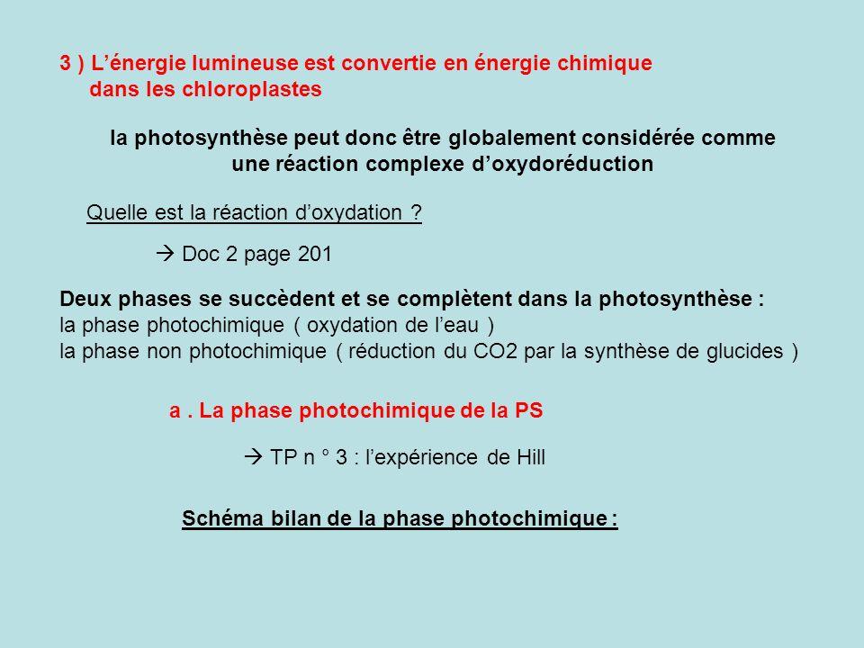 3 ) Lénergie lumineuse est convertie en énergie chimique dans les chloroplastes la photosynthèse peut donc être globalement considérée comme une réact